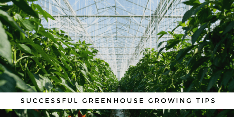 7 Helpful Tips for Greenhouse Growing Amateurs