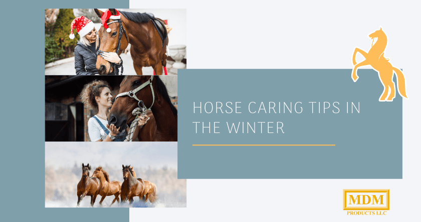 7 Winter Horse Care Tips
