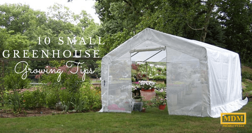 10 Small Greenhouse Growing Tips