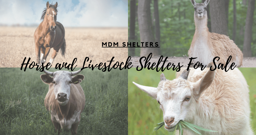 Benefits of Livestock and Horse Shelters For Sun and Weather Protection